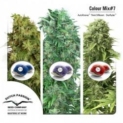 Colour Mix 7