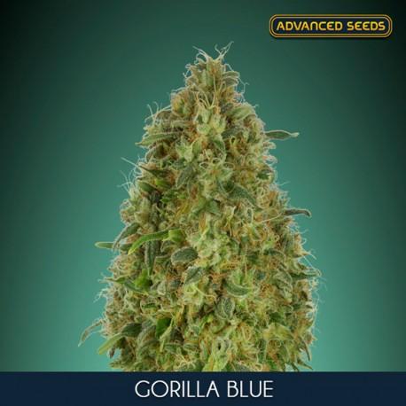 Gorilla Blue ADVANCED SEEDS