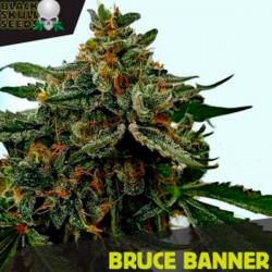 Bruce Banner 3 u. fem. Black Skull Seeds