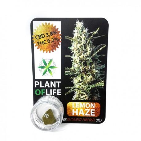 Hachís OG KUSH  CBD Plant of Life(1 gramo)